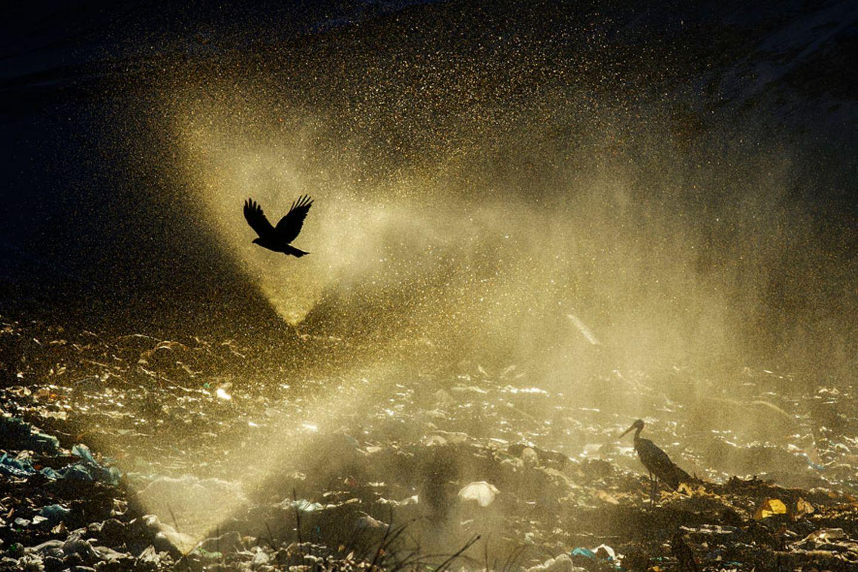 Lichtspiel auf der Deponie (Mensch und Natur)