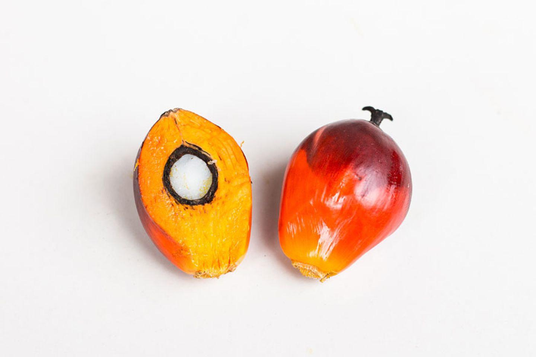 Palmöl: fetter Umweltschaden