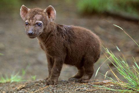 Tierkinder: 11 Tiere, die Sie wohl noch nie als Babys gesehen haben