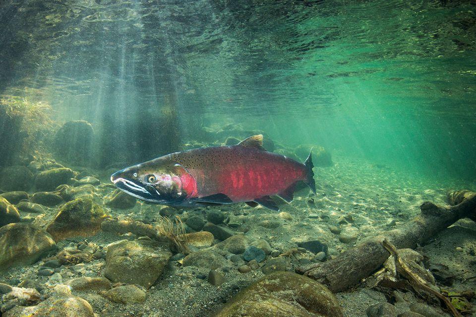 Fischratgeber: Diese 10 Fische sollten Sie nicht essen