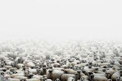 Eine Schaffarm in Silvasu de Sus