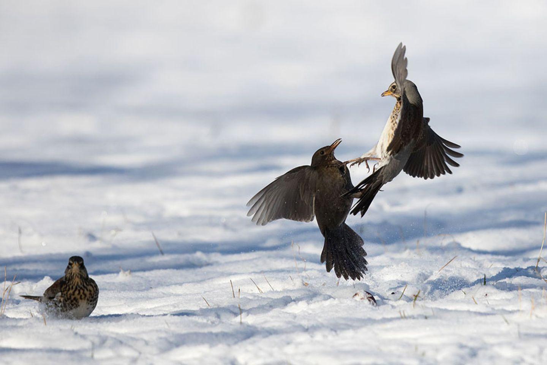 Kampf im Schnee