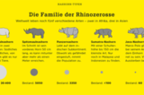 Nashorn-Arten