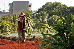 Havanna ist die Hauptstadt mit dem kürzesten Weg für landwirtschaftliche Produkte