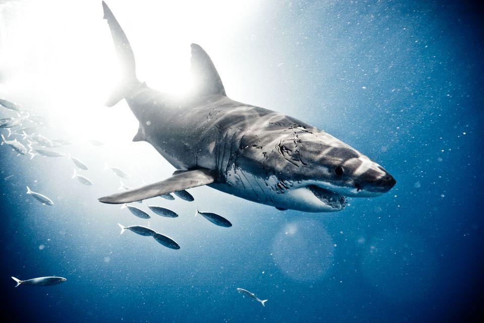 Unterwasserfotografie: Ein Hollywood-Fotograf zeigt Haie in nie gekannter Intensität