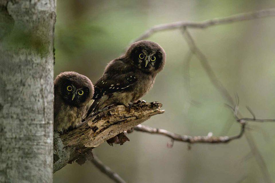 Nationalpark Schwarzwald: Hier kommt die Wildnis zurück