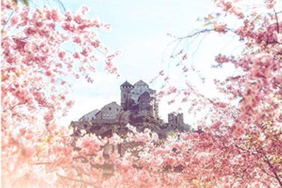 Instagram-Fotowettbewerb: Das sind Ihre schönsten Frühlingsbilder
