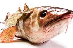 Gesunde Ernährung: Worauf sollte ich beim Fischkauf achten?