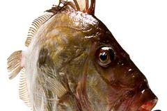 Gesunde Ernährung: Worauf sollte ich beim Fischkauf achten? - Bild 2