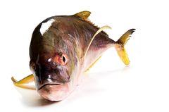 Gesunde Ernährung: Worauf sollte ich beim Fischkauf achten? - Bild 4
