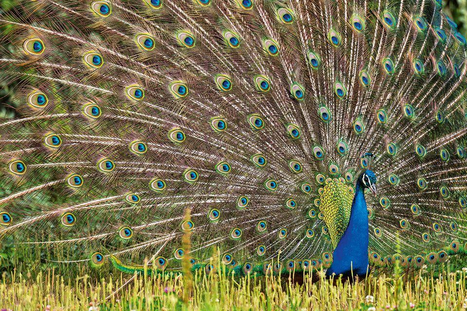 Tierische Farbenpracht: Wie Tiere täuschen, warnen, locken