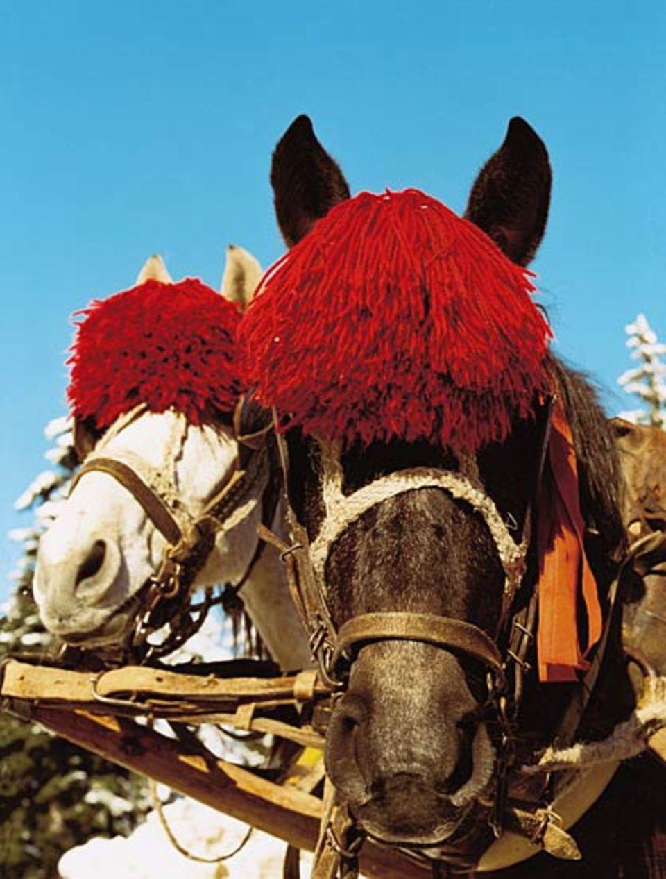 Wärmende Mützen oder Sonnenschutz? In Borovez tragen die Kutschpferde Kopfschmuck