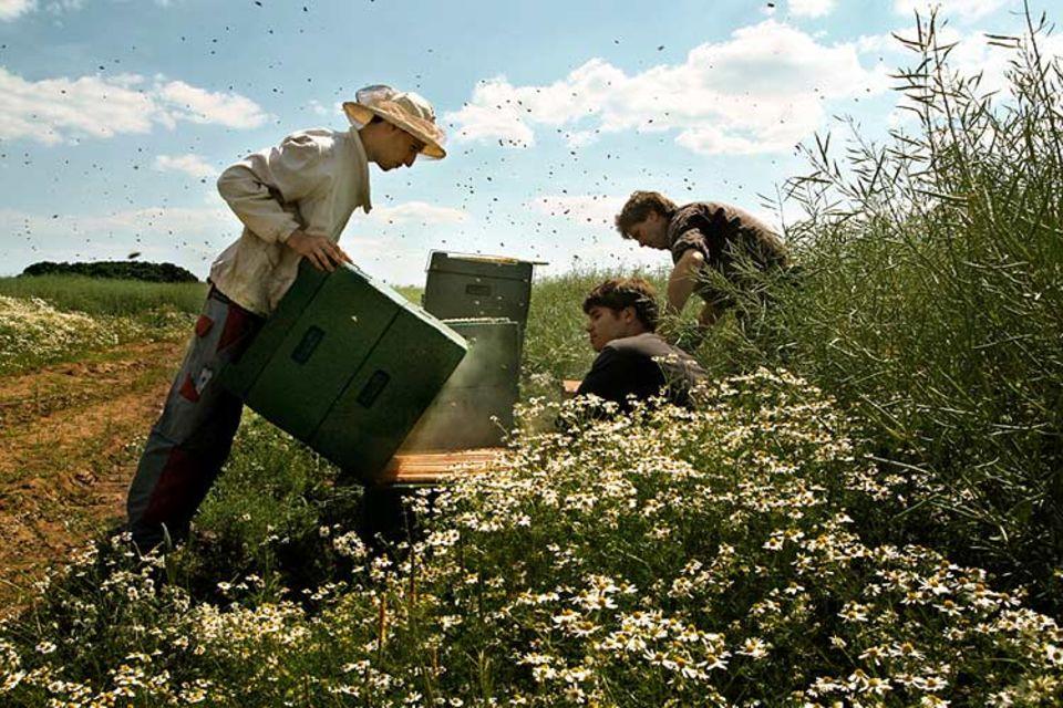 Beruf: Imkermeister Stefan Lempke (rechts) und seine beiden Auszubildenden Steffen Streich (Mitte) und Marc LaFontain (links) kontrollieren den Nachwuchs und die Honigausbeute eines Bienenvolkes