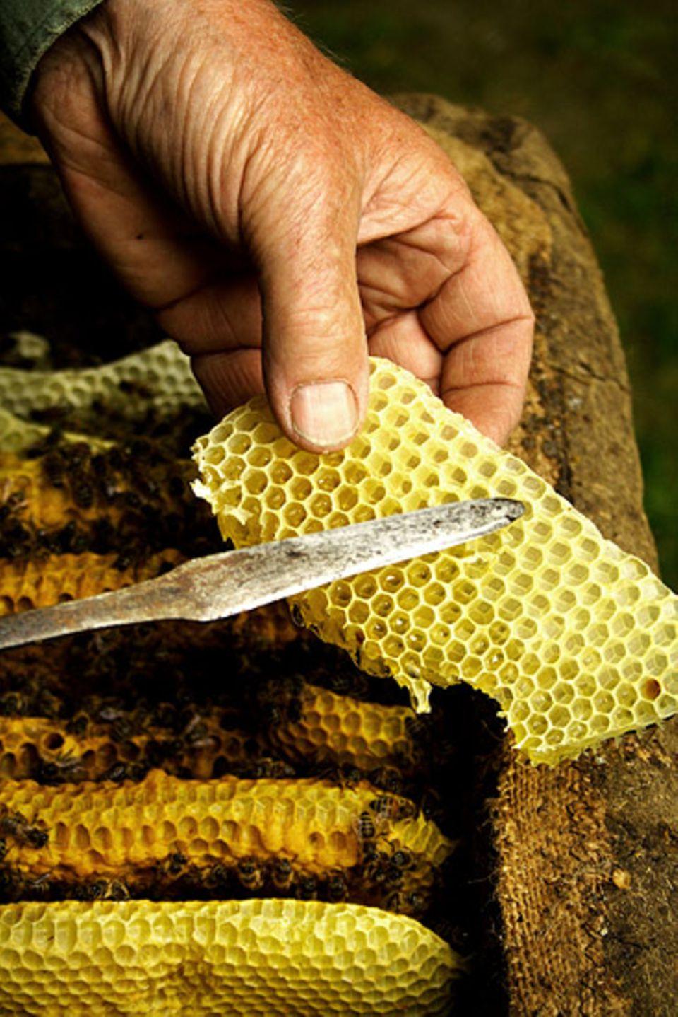 Beruf: Regelmäßig kontrollieren Imker die Konsistenz und Farbe ihres Honigs