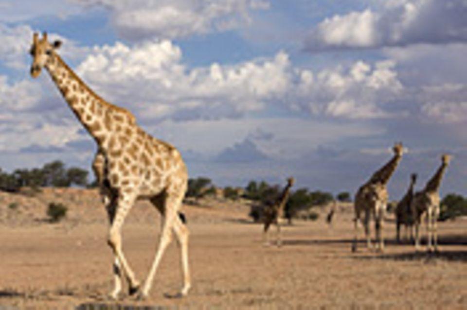 Südafrika: Südafrika: Der Park ohne Grenzen