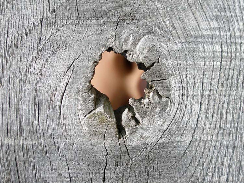 Redewendung: Holzauge, sei wachsam!