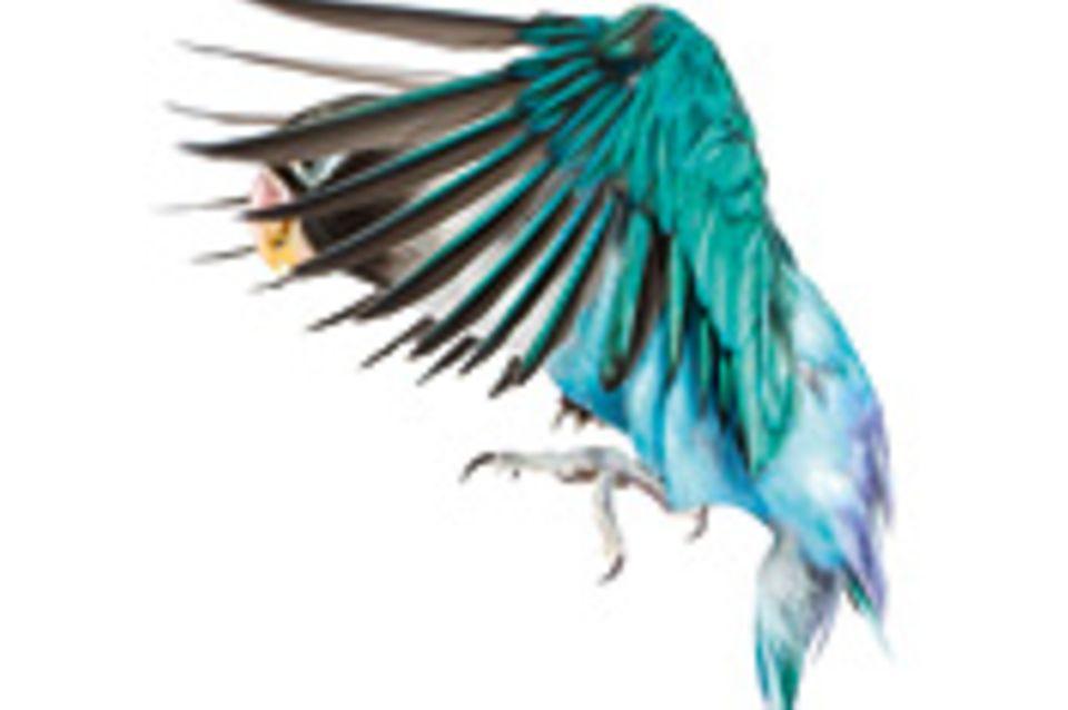 Evolution: Das Prinzip der Konvergenz