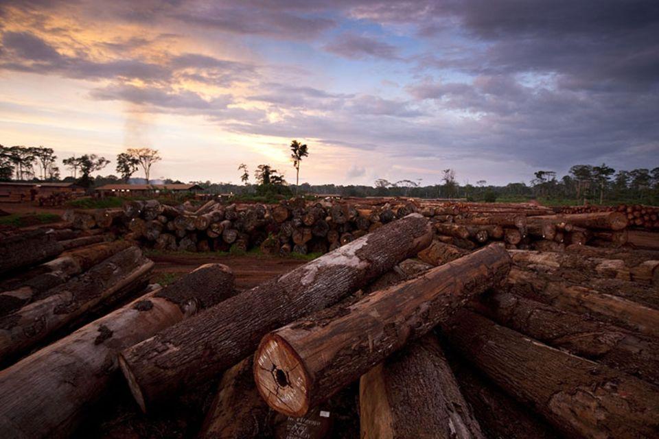 WWF-Report: Entwaldung im Kongo-Becken: 13 Millionen Hektar Wald gingen zwischen 2000 und 2010 jährlich verloren