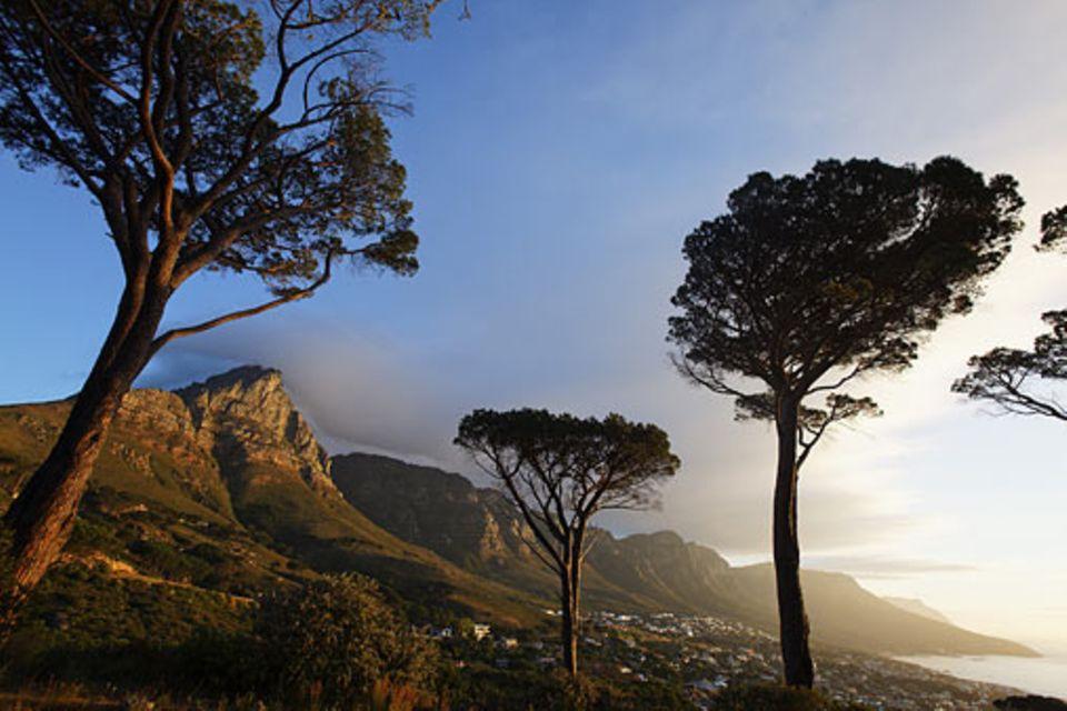 Reiseziel: Südafrika