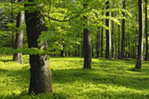 Waldzustand: Interview: Der Zustand des deutschen Waldes