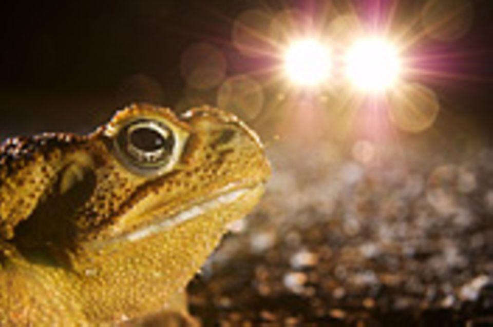 Ökologie: Licht aus!