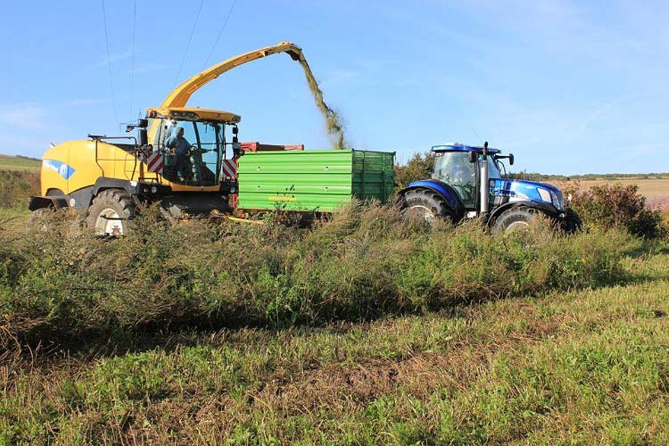 Biomasse: Spezialmaschinen sind nicht erforderlich. Mit dem Maishäcksler lassen sich auch Wildpflanzen ernten