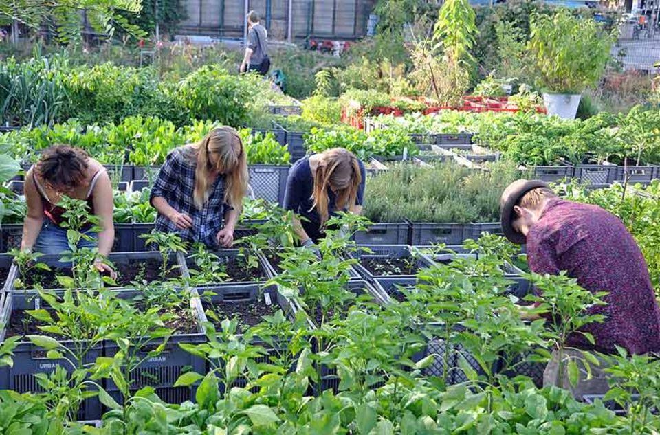 Gartenkunst 2.0: Kisten und Kästen mit viel Natur: der Prinzessinnengarten in Berlin