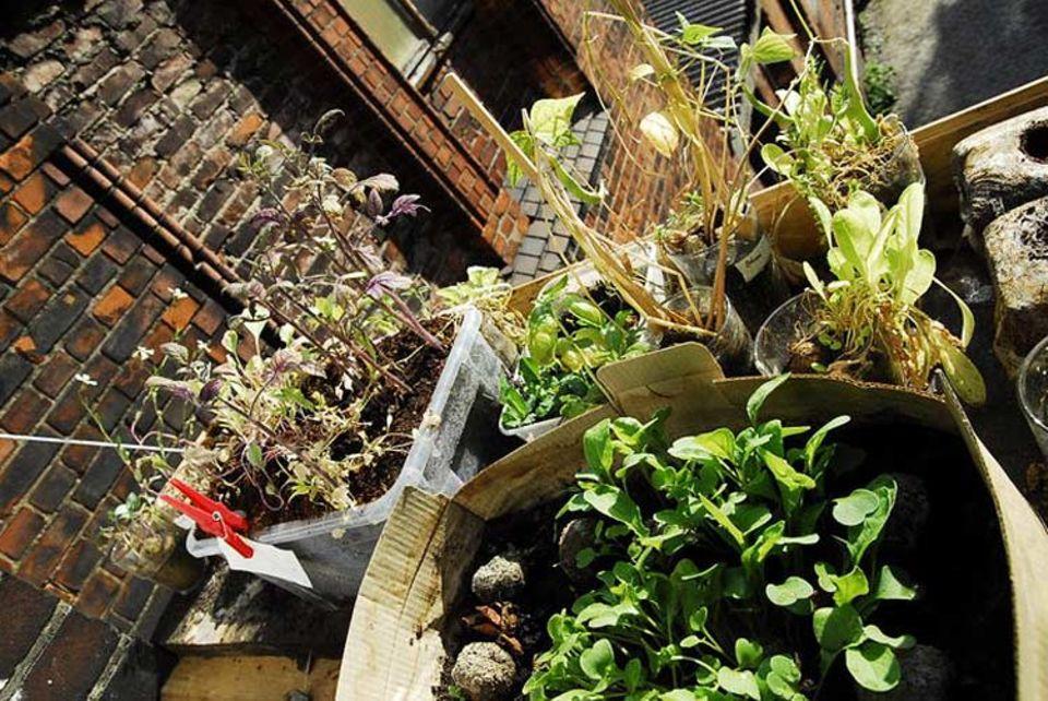 Guerilla Gardening: Nicht immer geht es nur um das Pflanzen von Blumen. Auch der Anbau von Gemüse und Kräutern wird immer beliebter