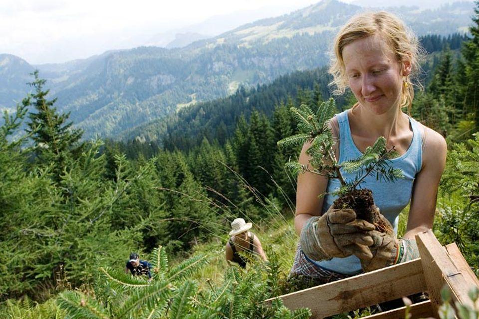 Bergwaldprojekt: Eine Woche lang sind die Freiwilligen mit Spaten und Axt im Wald unterwegs, sie pflanzen, fällen und bauen