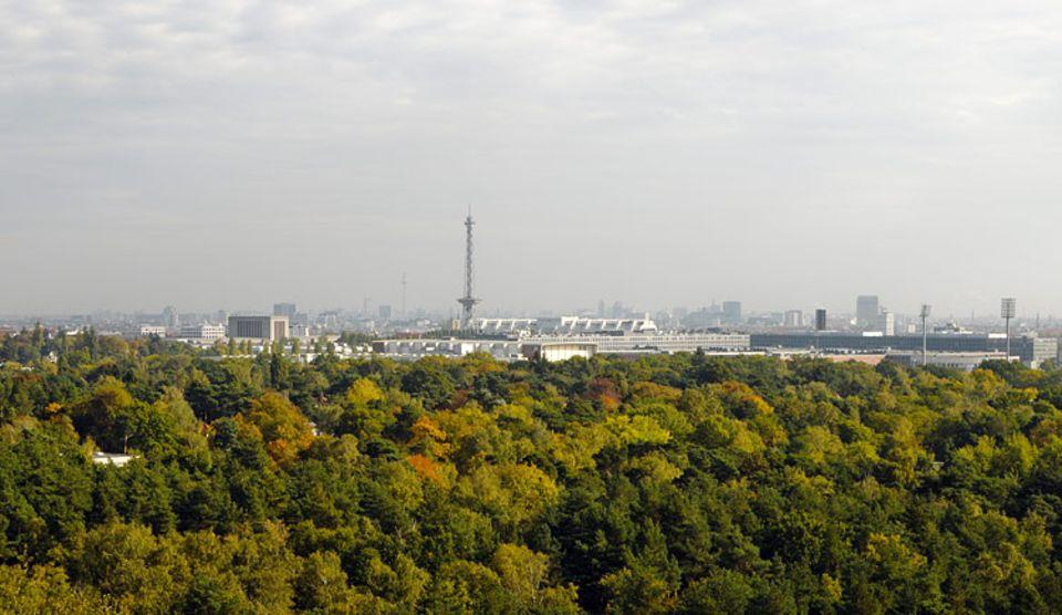 Naturschutz: Die Abgase der Braunkohlekraftwerke in der damaligen DDR schädigten den Waldboden im Berliner Grunewald