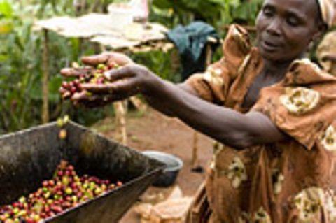 Fairtrade: Fairtrade: Fair kommt an