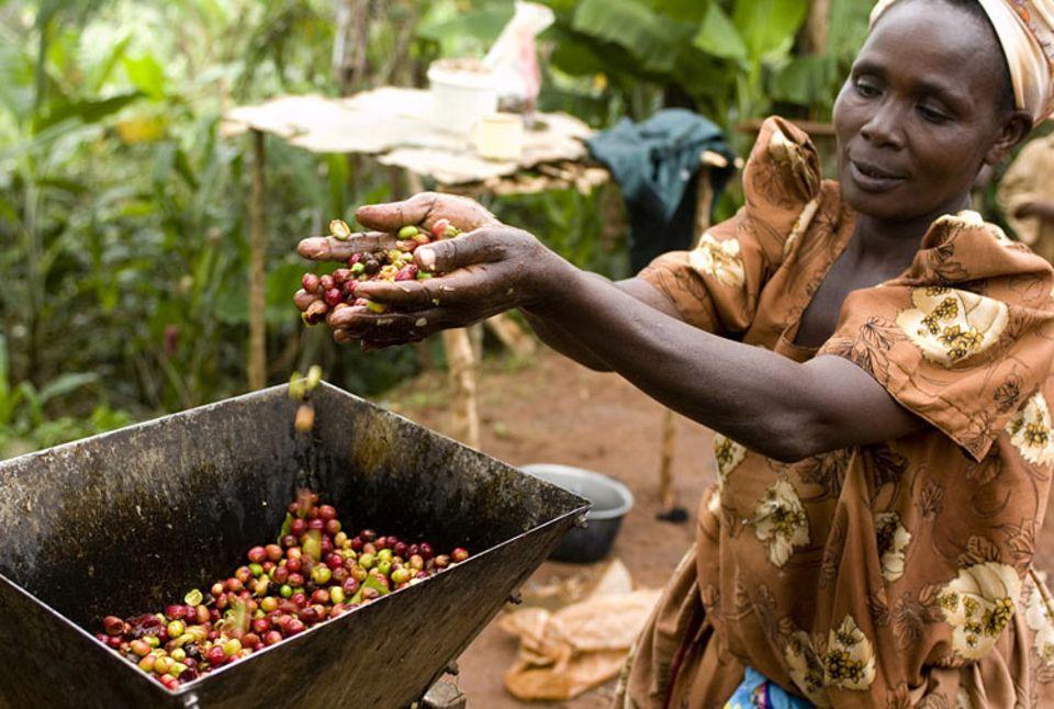 Fairtrade: Guter Preis für gute Arbeit: Kaffee gehört zu den klassischen Fairtrade-Produkten