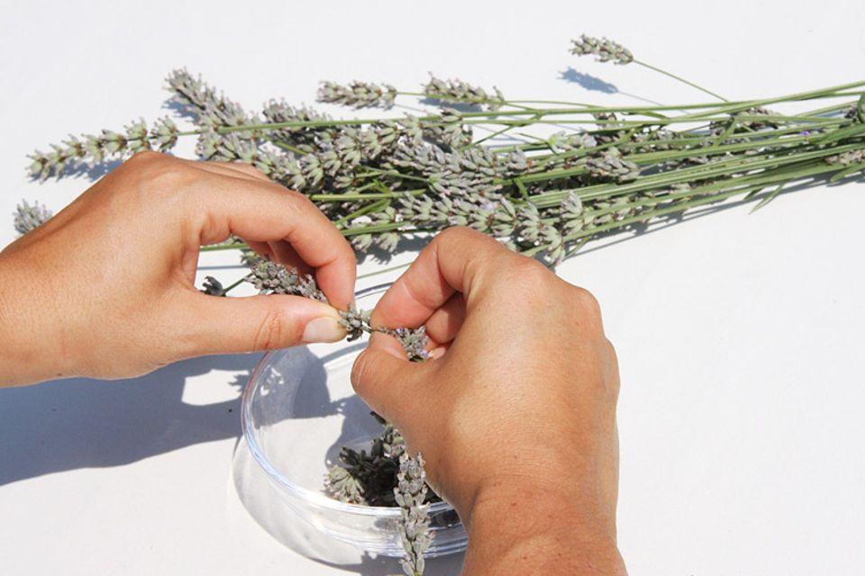 Tipps und Tricks: Die Blüten mit Daumen und Zeigerfinger von den Stielen abziehen
