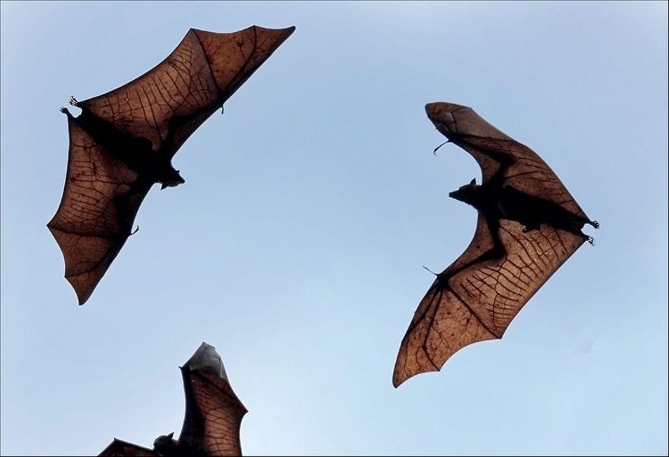 Tipps und Tricks: Von September bis November beziehen Fledermäuse ihre Winterquartiere