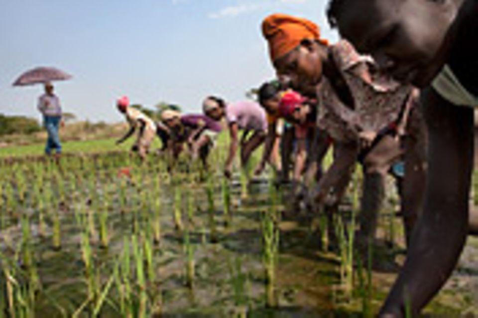 Äthiopien: Landraub in Äthiopien?