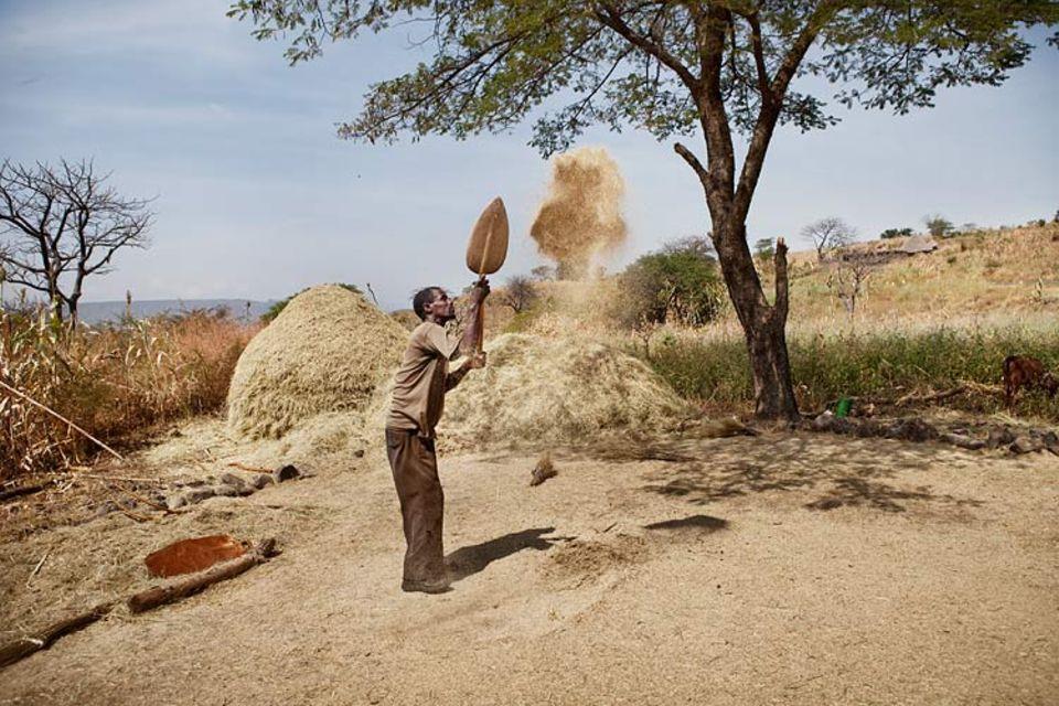 """Äthiopien: Ein Kleinbauer worfelt die einheimische Hirseart Teff. Die Erträge sind derart gering, dass Experten von """"grünem Hunger"""" sprechen"""