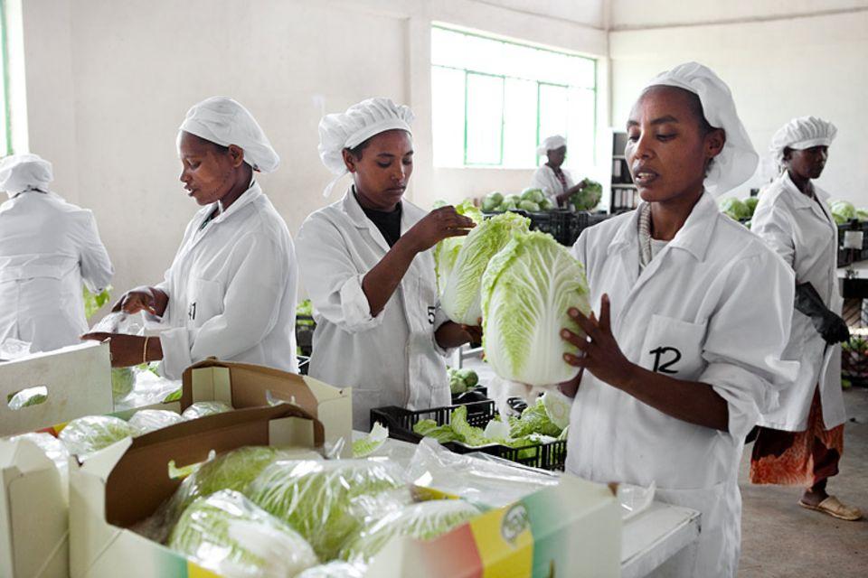 Äthiopien: Chinakohl verkauft sich auch in der Hauptstadt Addis Abeba - dank vieler Ausländer und Heimkehrer aus der äthiopischen Diaspora