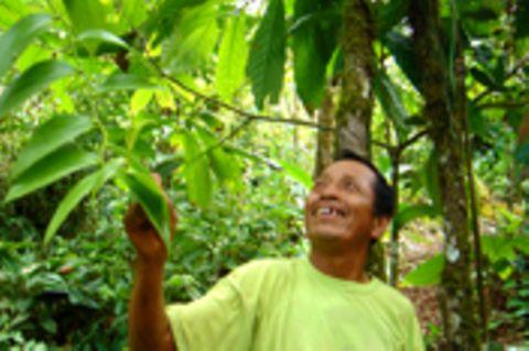 Ecuador: Waldschutz und Einkommensförderung am Río Napo