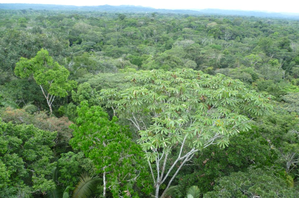 Ecuador: Blick aus 30 Meter Höhe auf den Regenwald bei Tena