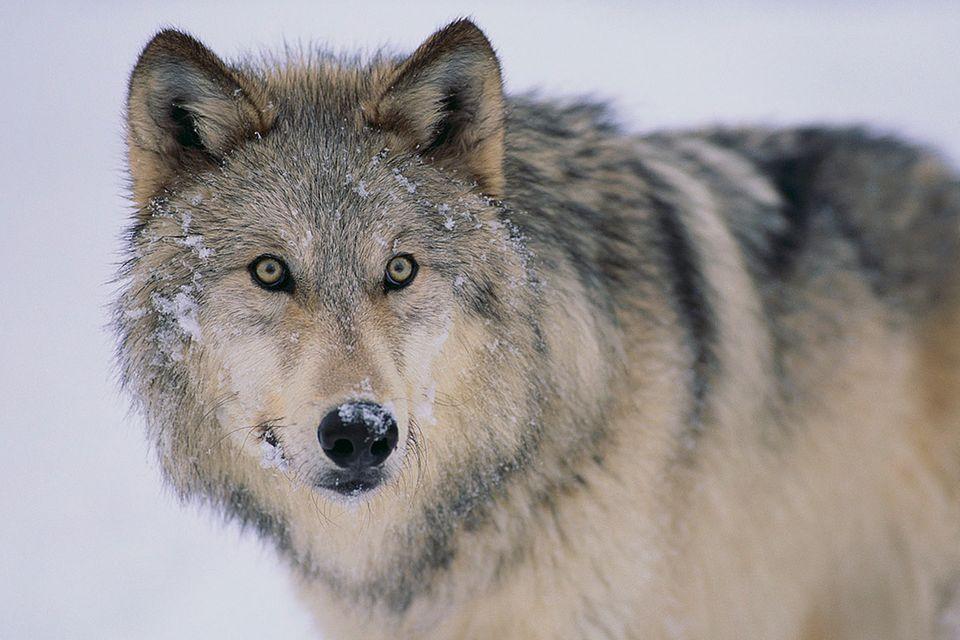 Umweltpolitik: Wie aus Paragrafen neue Wildnis wird