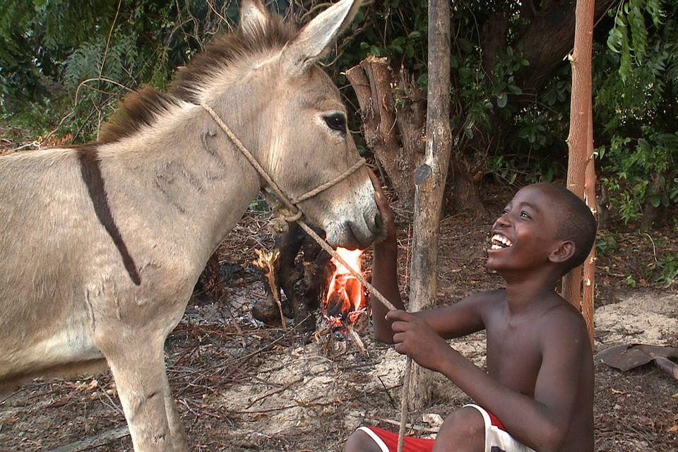 Lamu, die Insel der Esel