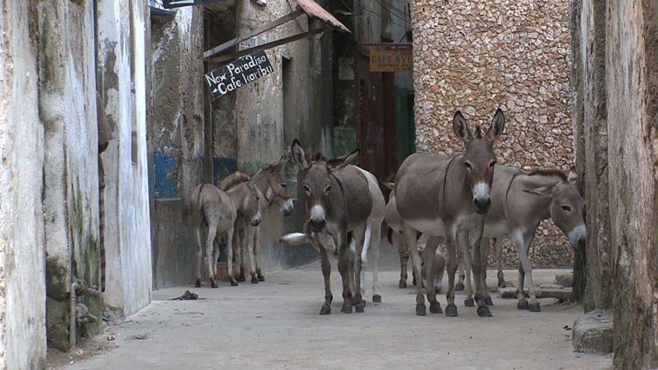 Für die 6.000 Esel der kenianischen Insel Lamu gibt es sogar ein eigenes Krankenhaus für alte oder kranke Tiere