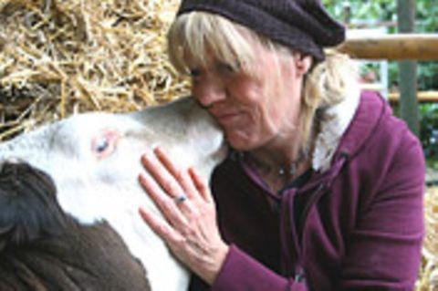 Kuh-Altersheim: Animal Farm