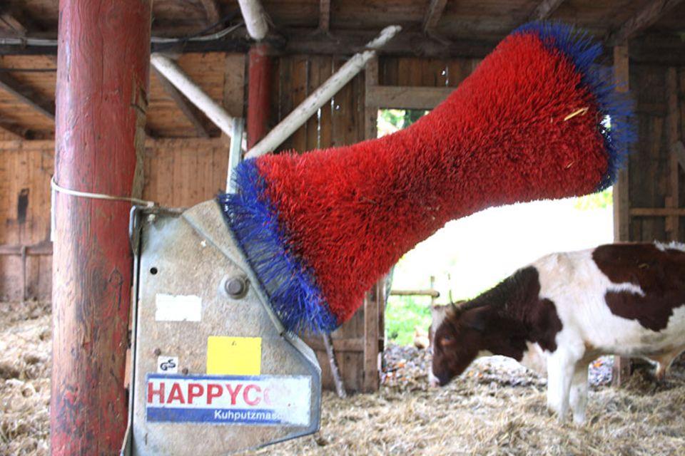 """Kuh-Altersheim: Wellness für Kühe: """"Happy Cow"""". Die Rinder brauchen sich nur gegen die Bürste zu stemmen, dann gibt es eine Massage"""