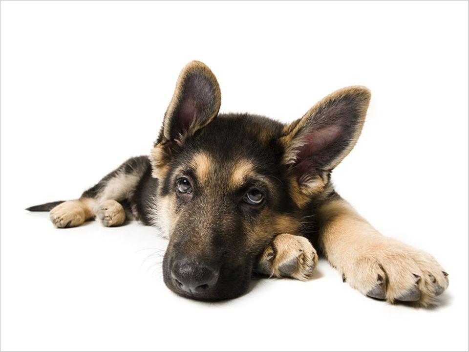 Redewendung: Ob dieser Hund auch auf den Hund gekommen ist? Ein wenig traurig sieht er zwar aus, aber um Geld muss er sich wenigstens keine Sorgen machen