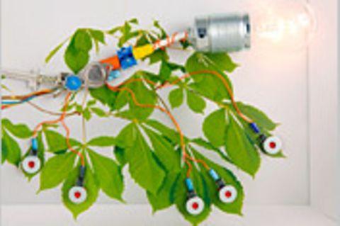 Technik: Die Glühpflanze