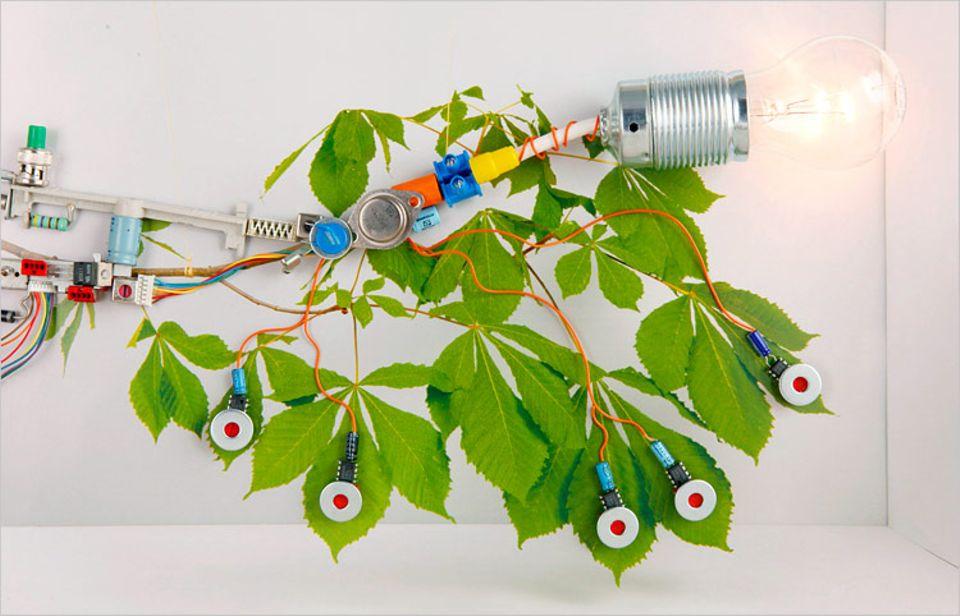Technik: Pflanzenkraftwerk: In Wahrheit die Arbeit von Bakterien