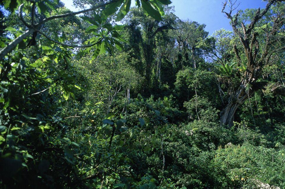 Regenwald bei Bonga