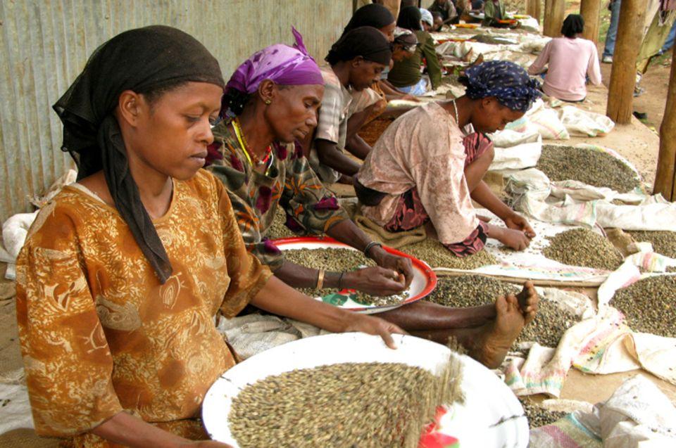 In Handarbeit sortieren diese Frauen in Bonga nicht perfekte Kaffeebohnen aus