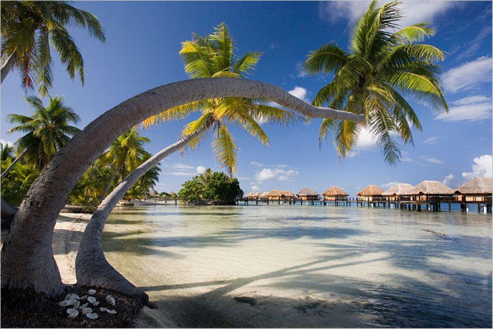 Reisephänomene: Eine Woche unter Palmen vergeht meist schneller als eine Woche im Büro